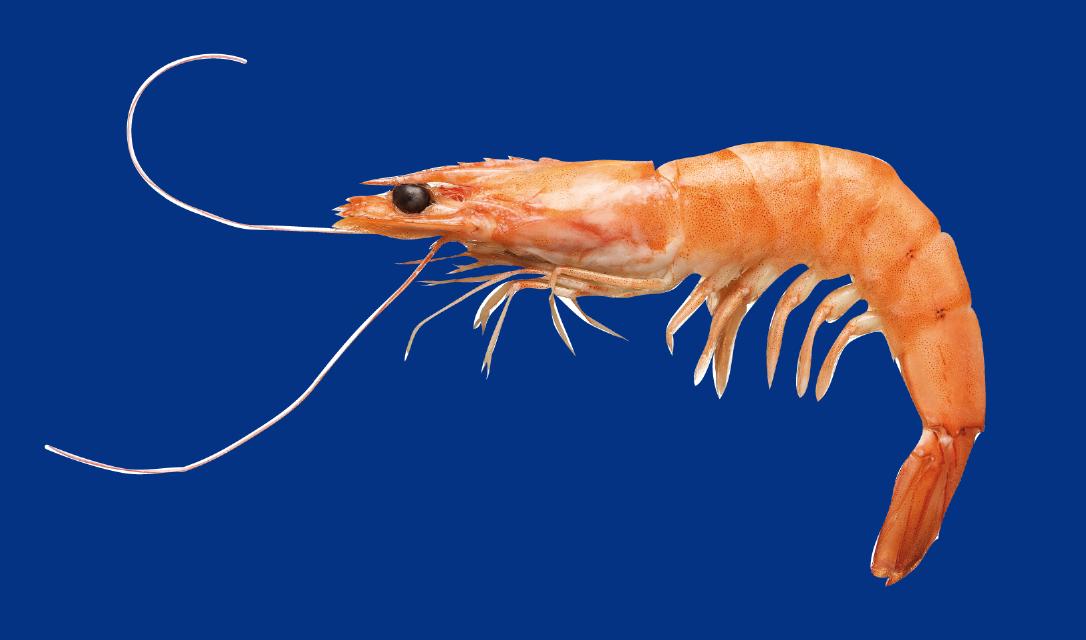 pesce-1